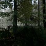 the forest (2)