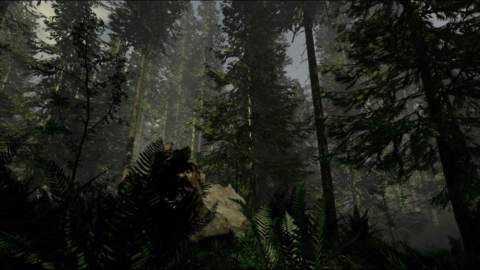 the forest (5)