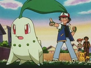 ash-chikorita-pokemon-anime