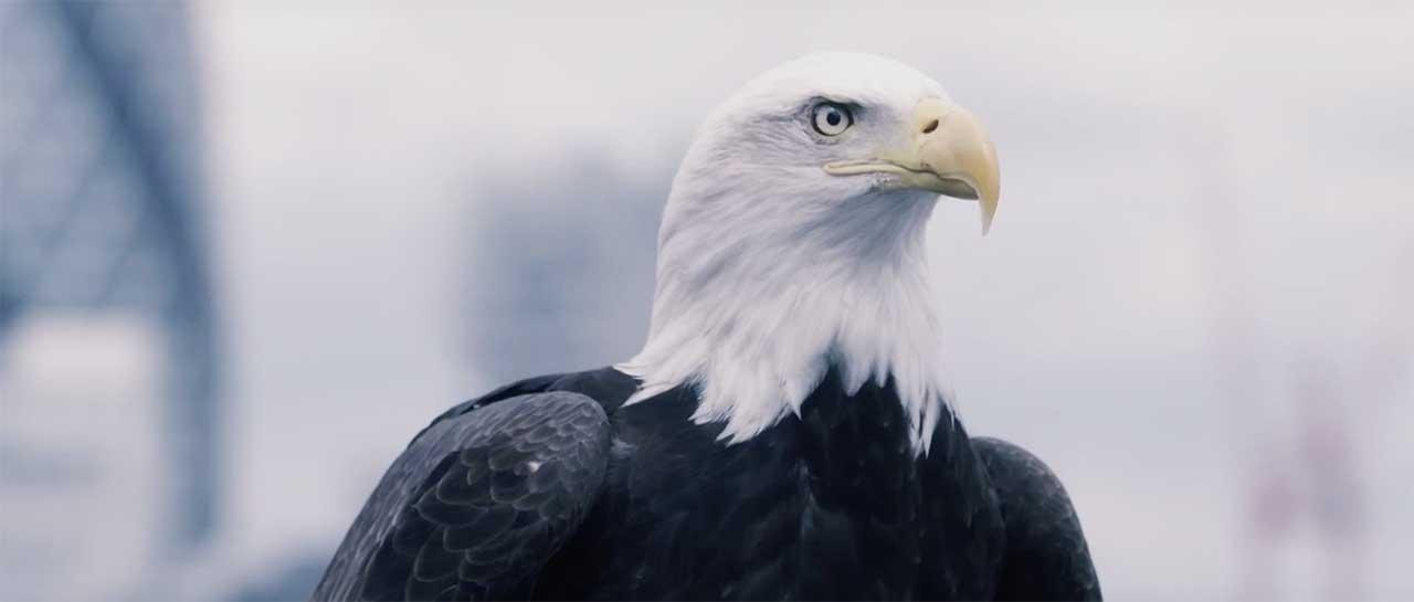 eagle-vision