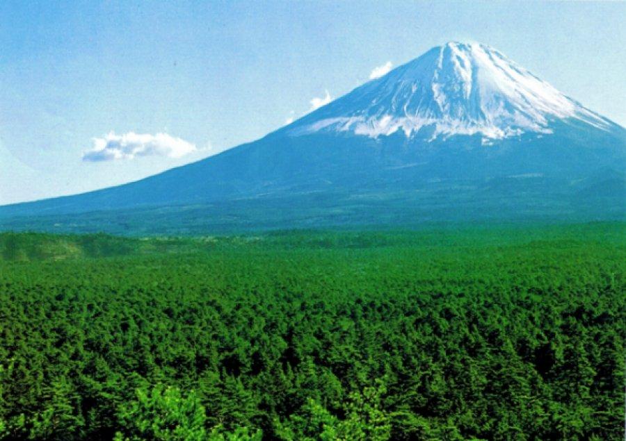 aokigahara fuij