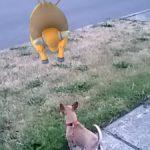 PokemonGoStrangePlaces27
